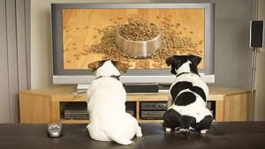 perros-viendo-tele